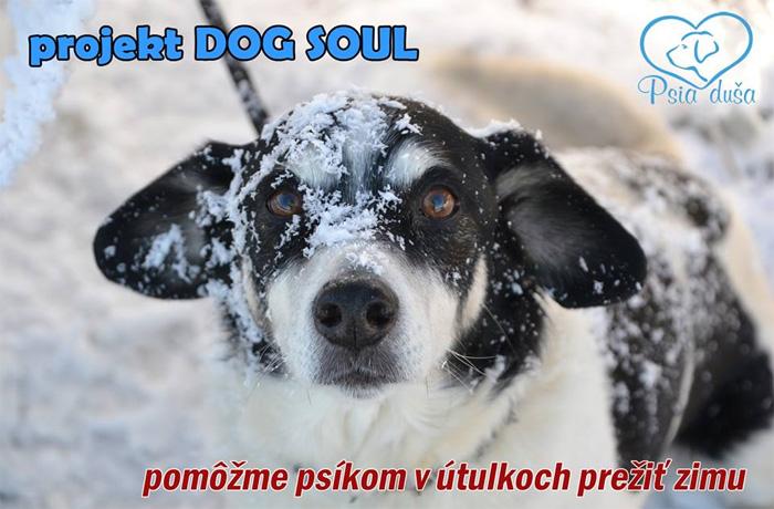 projekt DOG SOUL – búdy pre útulky