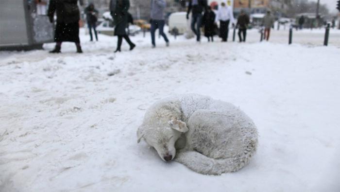 V zime nás útulkáči najviac potrebujú